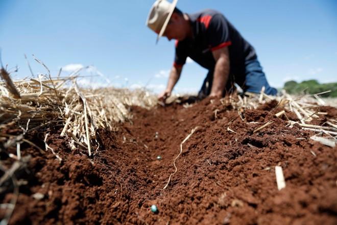 Produtor Rogério Pacheco confere sulcos de plantio de soja sobre a palha, em Carazinho, interior do Rio Grande do Sul | Jonathan Campos/Gazeta do Povo