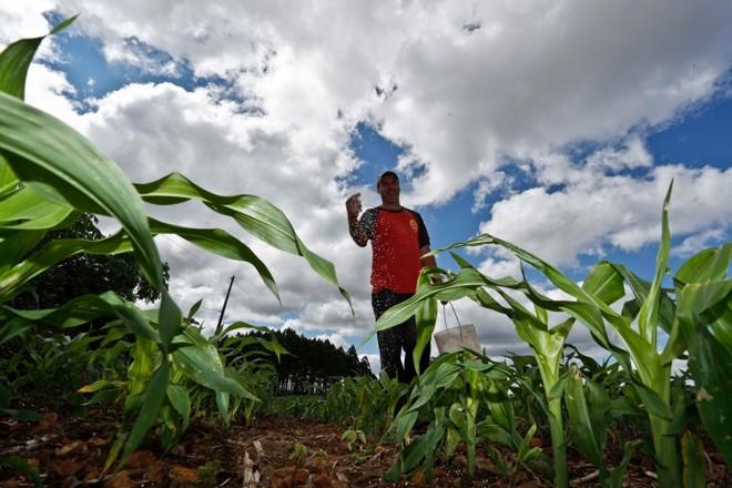 O produtor Gilson Korkedt, de Coronel Freitas (SC), vai apostar no milho este ano. Dos  49 hectares que possui, 39 serão cobertos com o cereal. | Jonathan Campos/Gazeta doPovo