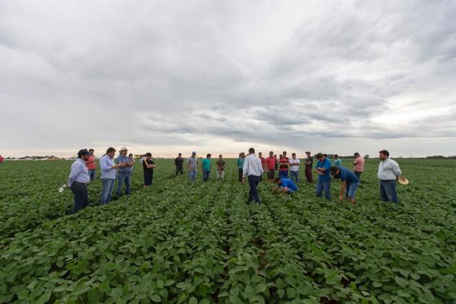 Agricultores do Paraguai reunidos:produtores realizam de plantio de soja sobre soja, o que pode impactar a produtividade. | Fernando Zequinão/Gazeta do Povo