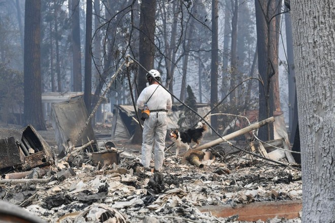 Mike Delannoy e seu cão Journey vasculham por entre os escombros em Paradise, Califórnia. As equipes de busca estão vasculhando milhares de estruturas destruídas pelo fogo em busca de sinais das pessoas que ainda estão desaparecidas. | Ricky Carioti/Washington Post
