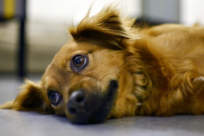 """Matar cachorro a grito"": isto é linguagem anti-animal | Pixabay"