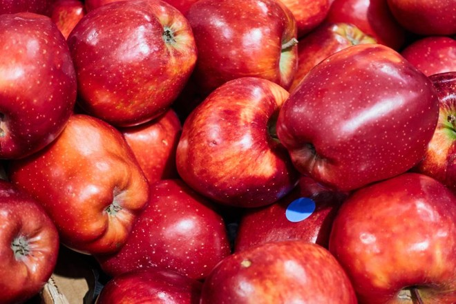 Farinhenta, maçã  da variedade Red Delicious  perdeu popularidade nos últimos anos  para concorrentes mais crocantes e suculentas | BigStock/