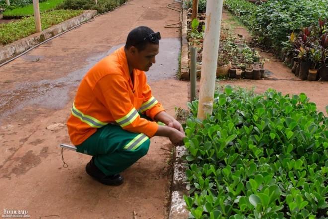 4b3211928 Rogério Gomes da Silva trabalha como jardineiro e quer ser professor de  História