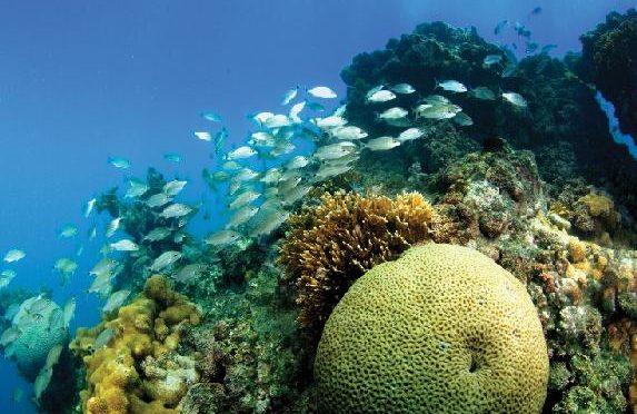 Recife de coral no Parque Nacional Marinho de Abrolhos, Bahia.