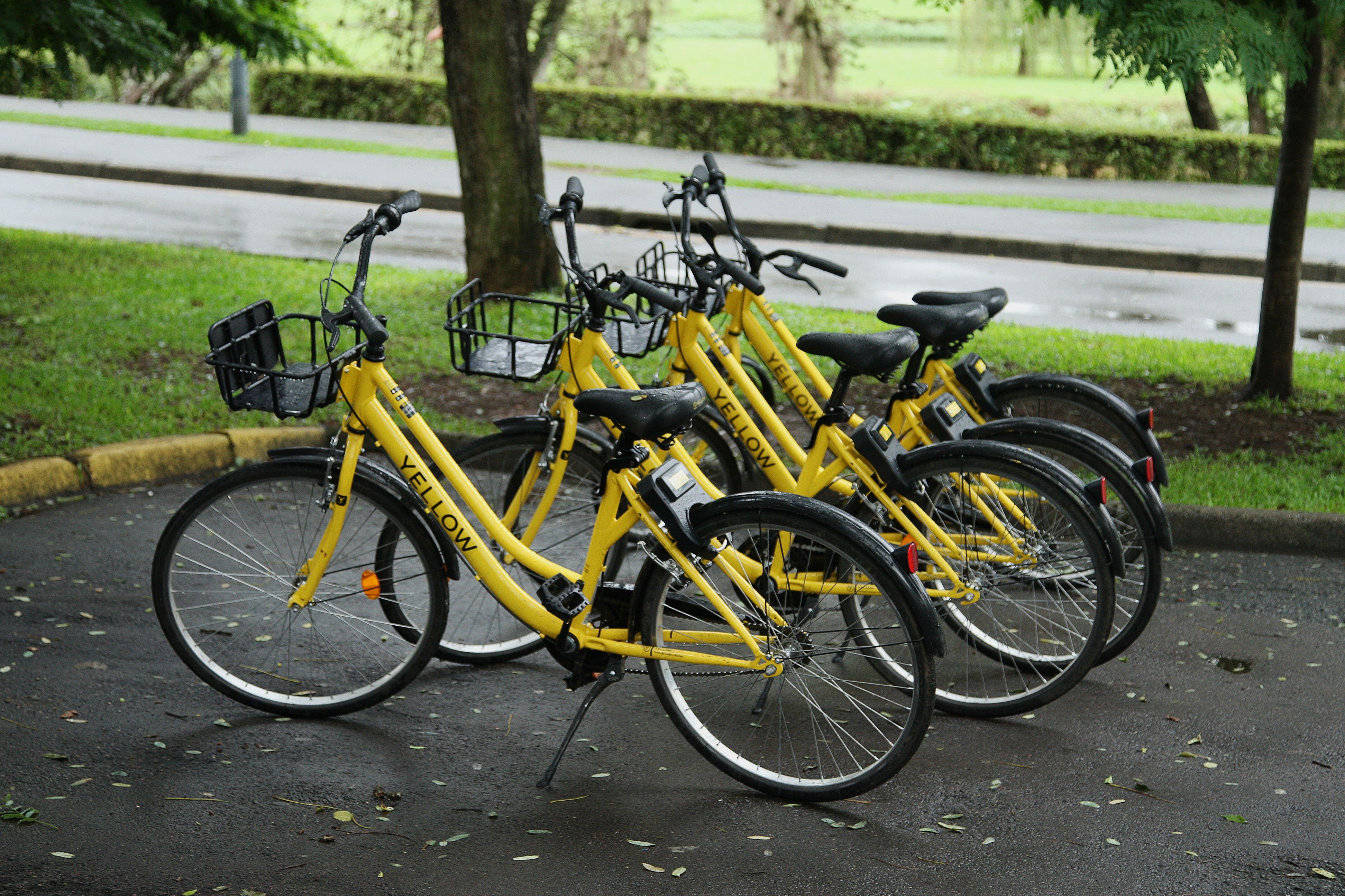 bicletas compartilhadas em parque de Curitiba