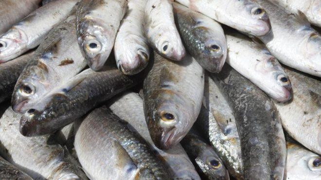 Resultado de imagem para foto de muitos peixes
