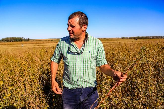 Martin Sellanes percorre lavoura de soja antes do início da colheita em mais um talhão | Michel Willian