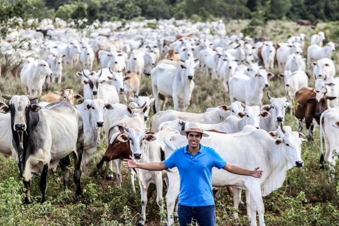Carlos Henrique Naves Júnior, de Peixe (TO), cria boi safrinha consorciado com a soja na primeira safra. O produtor notou que trocar a pastagem pela palhada melhorou a produtividade do gado. | Rogério Machado/Gazeta do Povo