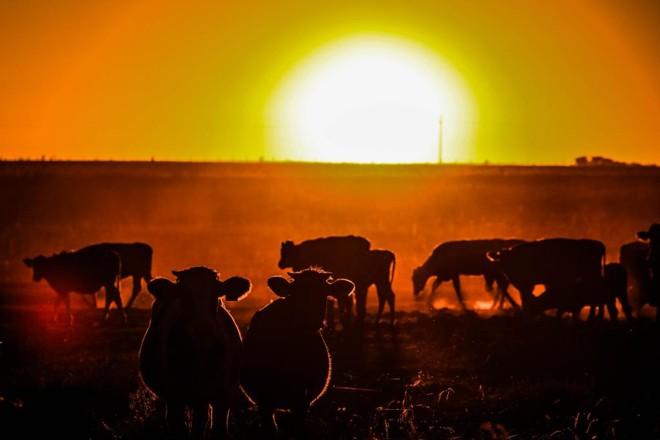País vizinho tem economia rural ainda fortemente ligada à criação de gado | Michel Willian