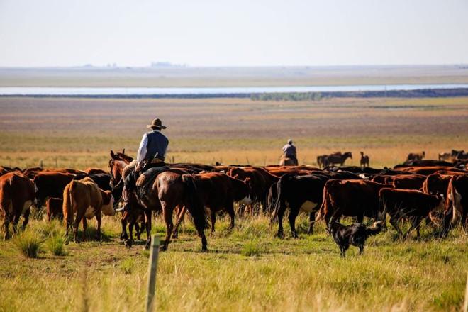 Criação de gado de raça europeia predomina nas planícies uruguaias | Michel Willian