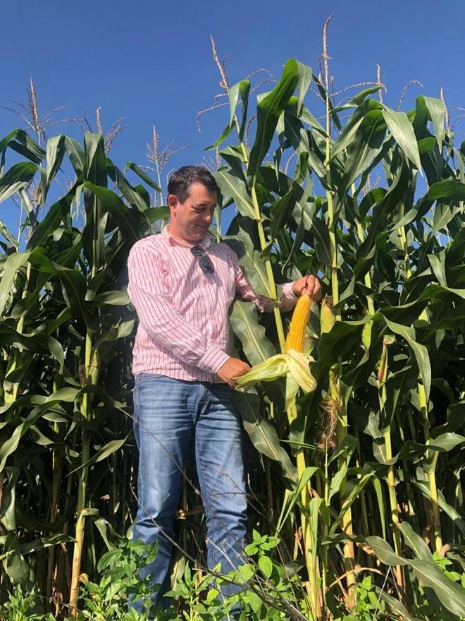 Wilson Marcolin mostra milho com potencial de alta produtividade colhido em sua fazenda em Nova Santa Rosa (PI) | Giovani Ferreira/Gazeta do Povo
