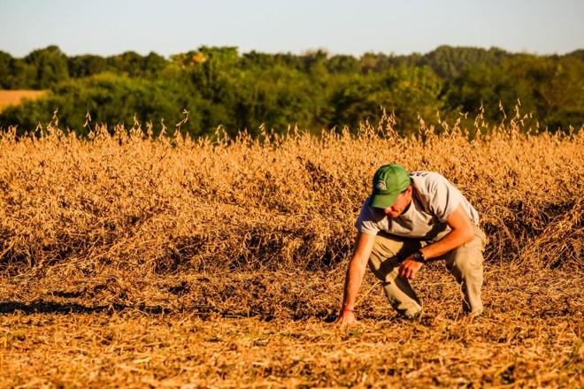 Sebastián Fernandez confere campo de soja após passagem da colheitadeira sobre o primeiro talhão | Michel Willian