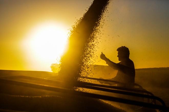 Com 15% dos campos ceifados na Argentina, a Bolsa de Cereais de Rosário projeta uma safra de 57 milhões de toneladas para esta temporada, contra 32 milhões no ciclo anterior . | Michel Willian/Gazeta do Povo