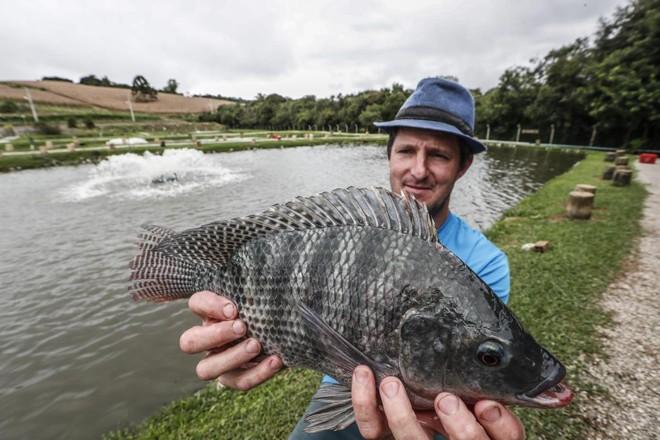 Jorge Luís Osligi mostra uma das carpas que mantém nos tanques do pesque pague. O aerador, ao fundo, ajuda a manter as condições ideal para a manutenção dos peixes. | Jonathan Campos/Gazeta do Povo