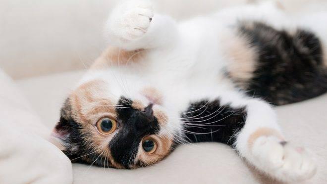 gato-deitado-apartamento