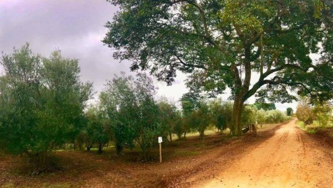 Caminho das Oliveiras, em Ventania