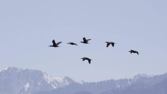 Os bons ensinamentos das aves migratórias