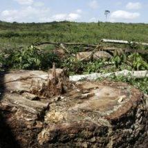 Desmatamento, fome, desemprego. Os números do próprio governo que Bolsonaro contesta
