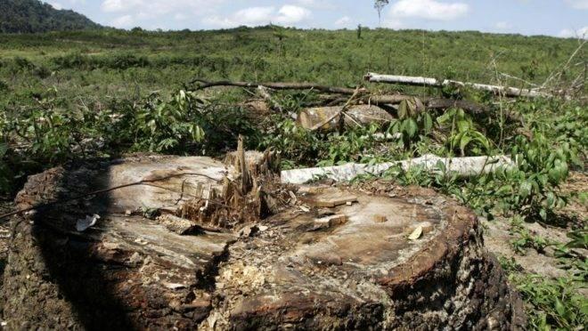 Ritmo de desmatamento voltou a crescer no Paraná.