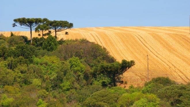 Mudanças no Código Florestal