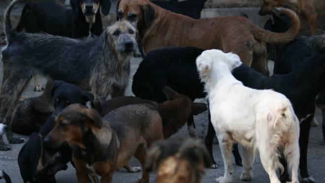 Cães na antiga sede da Sociedade Protetora dos Animais de Curitiba