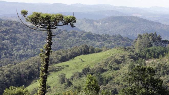 Parque Nacional dos Campos Gerais, em Ponta Grossa.