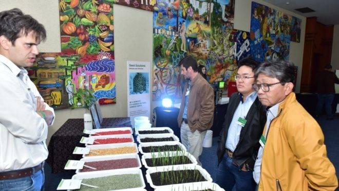produtores observam sementes melhoradas geneticamente