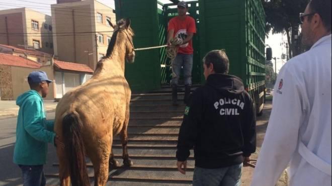 O cavalo foi levado para o Centro de Referência para Animais em Situação de Risco (Crar), da prefeitura de Curitiba.
