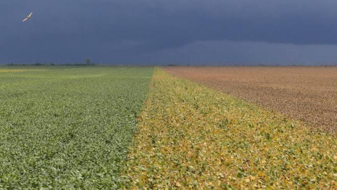 Resultado de imagem para Agricultor familiar terá mais mercado em programa do biodiesel