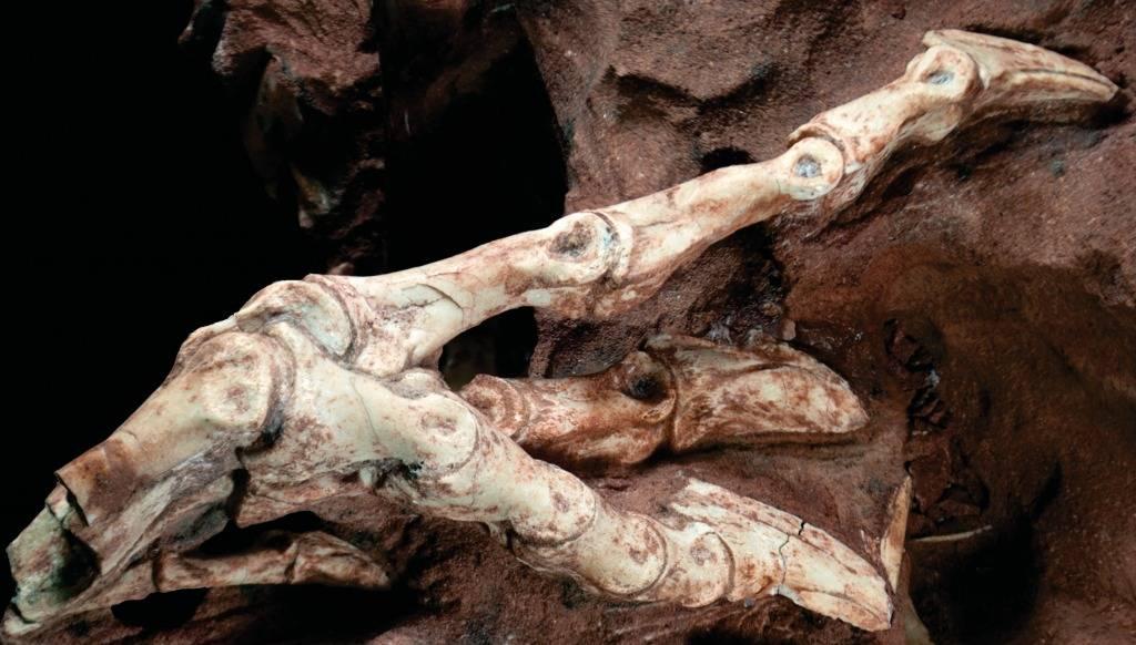 Fóssil de dinossauro