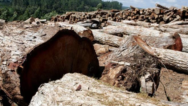 Brasil terá de cumprir exigências ambientais determinadas no acordo entre União Europeia e Mercosul