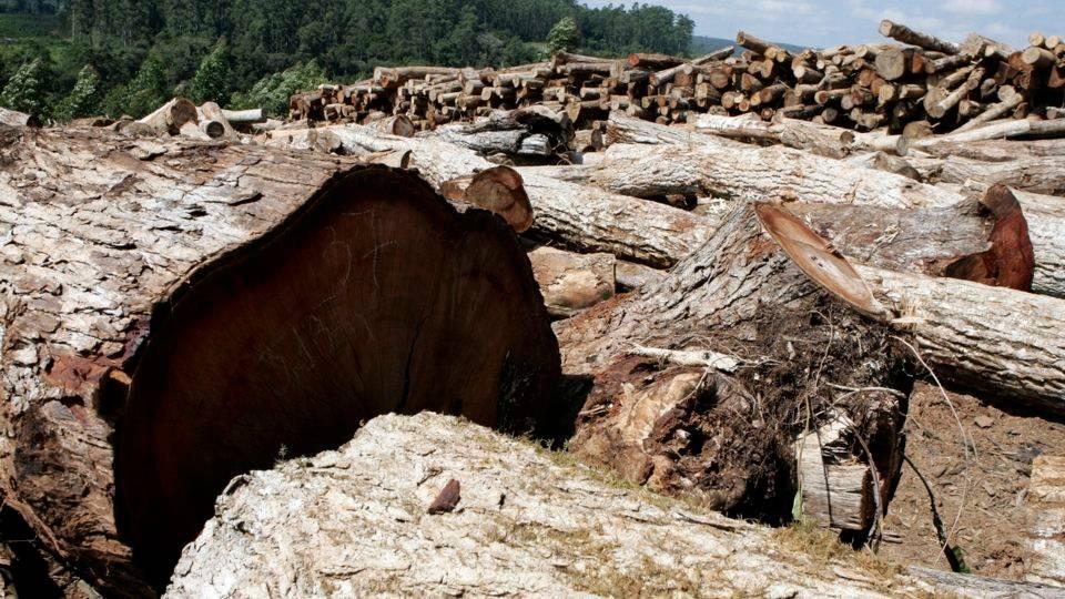 As exigências ambientais que o Brasil precisa cumprir em prol do acordo Mercosul-UE