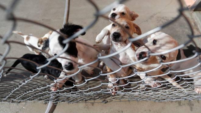 Crianças vão saber como os animais chegam ao Crar e como evitar maus-tratos.