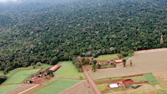 Imagem de 2013 mostra como a vegetação já havia tomado a Estrada do Colono