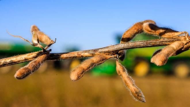 Entre as garantias dadas pela COFCO está o aumento da rastreabilidade de produtos agrícolas, com foco na soja de origem direta no Brasil.