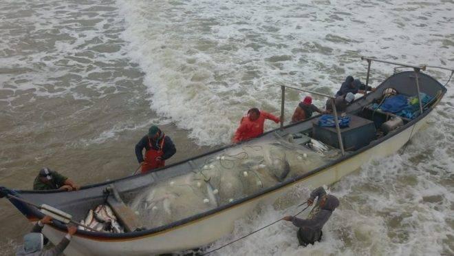 Pescadores de Matinhos pegam 4 toneladas de peixe em uma tarde