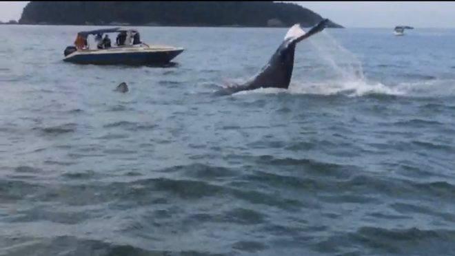 Baleia vista na Ilha do Mel. Imagem: reprodução vídeo.