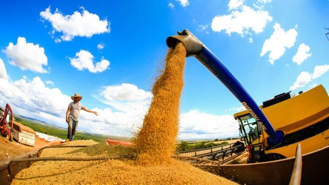 Colheita de soja em Itaberá (SP): segundo OMC, o Brasil é o maior exportador mundial da oleaginosa.