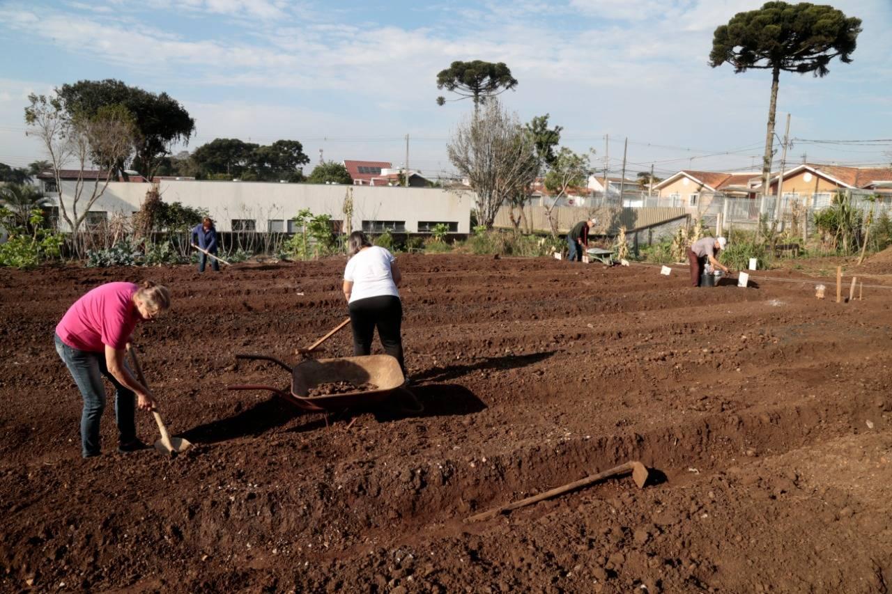 Atualmente, há 21 famílias registradas na prefeitura para plantarem no local. Foto: Aniele Nascimento / Gazeta do Povo