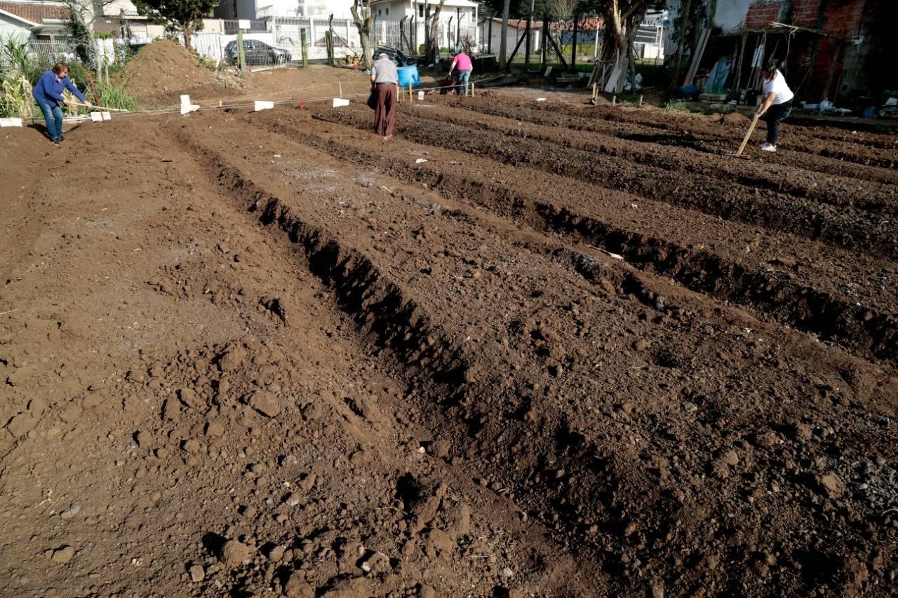 O terreno possui 1 mil m² e há espaço para 28 canteiros. Foto: Aniele Nascimento / Gazeta do Povo.