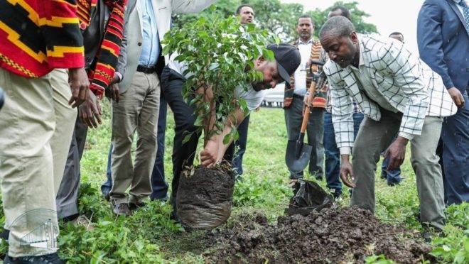 Pessoas plantaram mais de 353 milhões de árvores na Etiópia em um dia, segundo autoridades do país