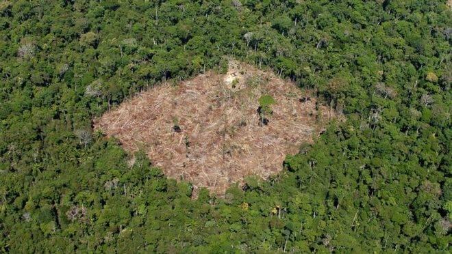 Governo diz que dados errados sobre desmatamento da Amazônia prejudicam o Brasil