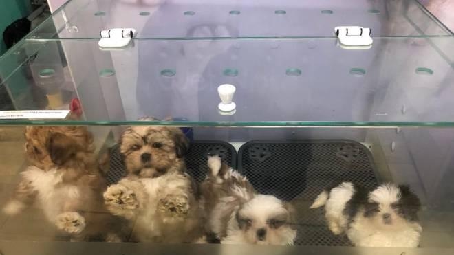 Cachorros resgatados em pet shop no Boqueirão ficavam em aquários.