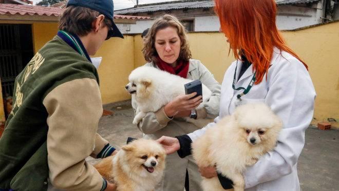 Cachorros da raça lulu da pomerânia eram vítimas de maus-tratos no bairro São Braz.
