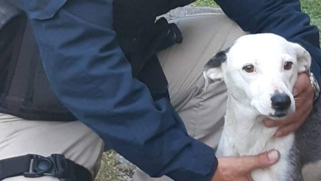 Cadela foi resgatada pela PRF com muitas feridas em decorrência de um câncer.