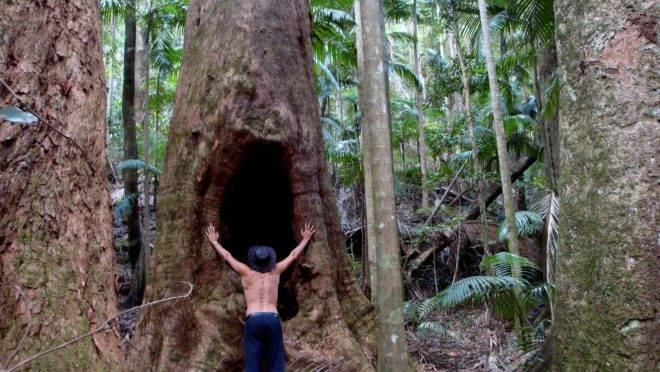 Criticadas por Lula e Bolsonaro e alvos até de CPI, ONGs que atuam na Amazônia são as maiores responsáveis pela imagem que o mundo faz da floresta.
