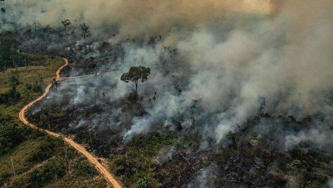 desmatamento e queimada consome a mata em Altamira (PA). Greenpace