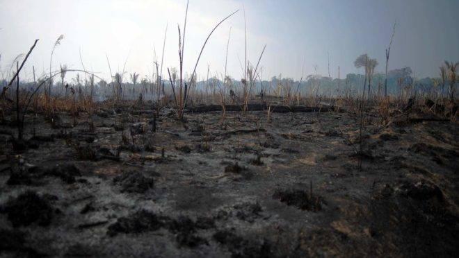 Floresta Amazônica - terra queimada