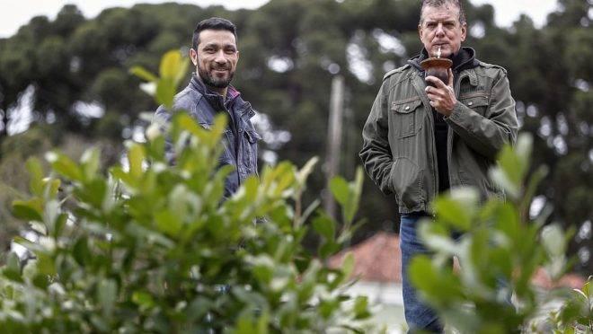 Os pesquisadores da Embrapa Florestas Ives Clayton Gomes dos Reis Goulart e Joel Ferreira Penteado Junior desenvolveram um manual para o cultivo da erva-mate no Brasil.