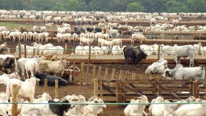 Médicos veterinários e técnicos agrícolas contratados por concurso público irão atuar em barreiras sanitárias contra a febre aftosa.